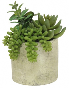 Green - succulent plant
